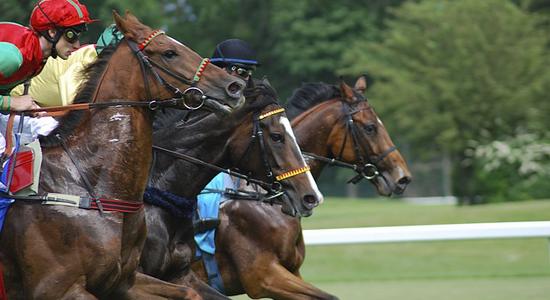ブックメーカーと中央競馬